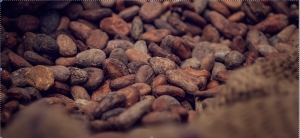 cocoa beans represented harsh reality