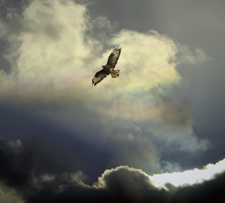 lone eagle in clouded sky