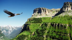 eagle soaring at mountain top